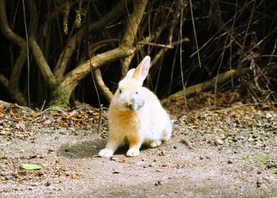 Rabbits island