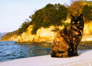 scales island cat