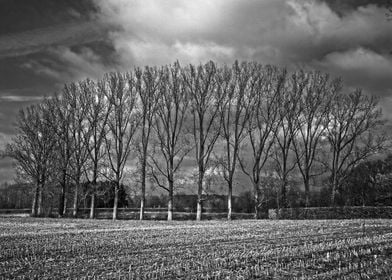 Nieuwlang Magic trees