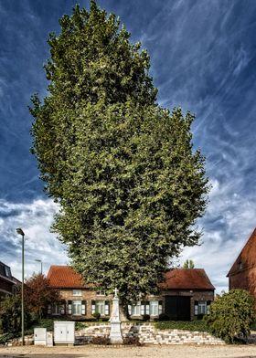 Magic tree Meensel