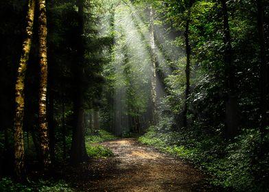 forest at St Joris Winge