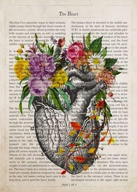 Heart Flower Anatomy