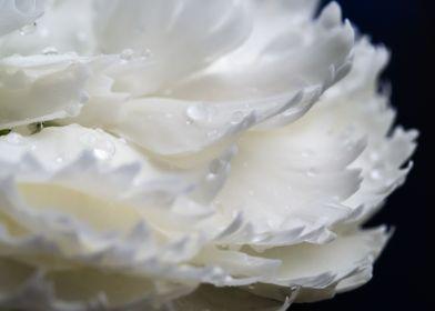 Wet blossom