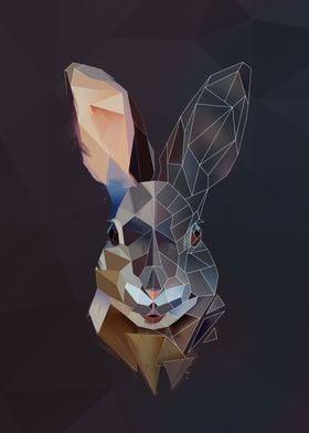 Mountain Rabbit