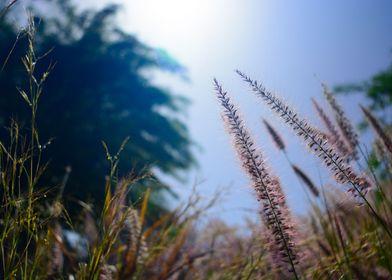 Ben Gurion Grass
