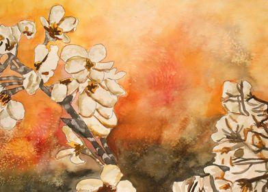 Cherry Blossum Flowers