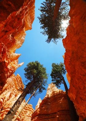 Bryce Canyon Giants