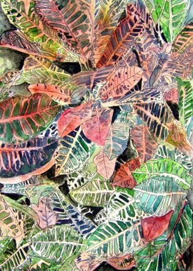Croton Tropical Plant