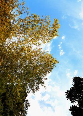 BLUE SKY NICE VIEW