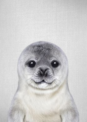 Baby Seal Colorful