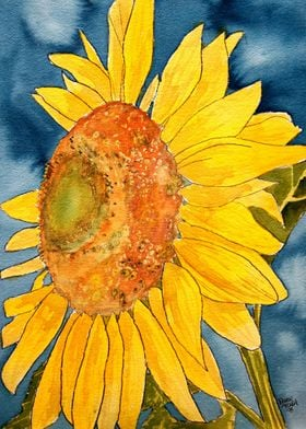 Sunflower Macro Flower