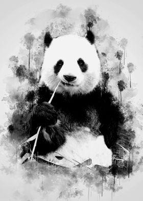 Giant Panda BW