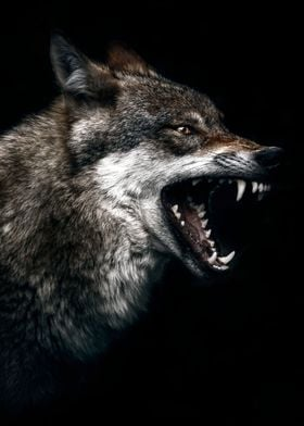 wild angry wolf poster  wo