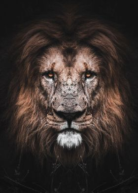wild lion face poster