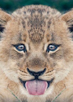 baby lion poster  simba