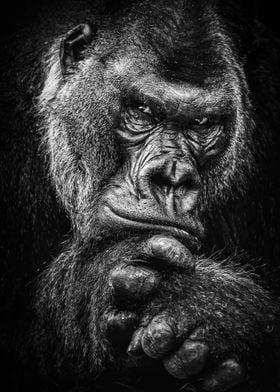 wild gorilla face poster
