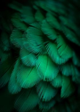 color  green feather