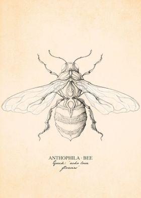 Anthophila Bee