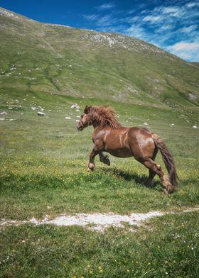Ride your wild horses
