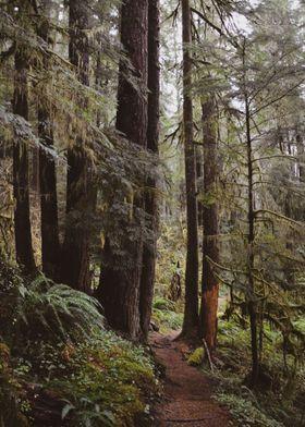 Drift Creek Hike