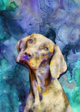 Dog Hungarian Pointer