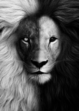 black and white lion face