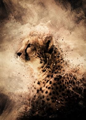 Observing Cheetah