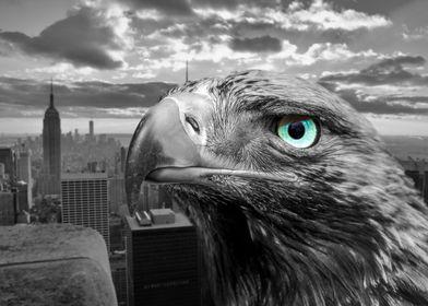 Eagle Eye in New York