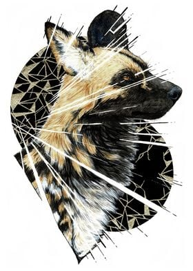 Shattered African Wild dog