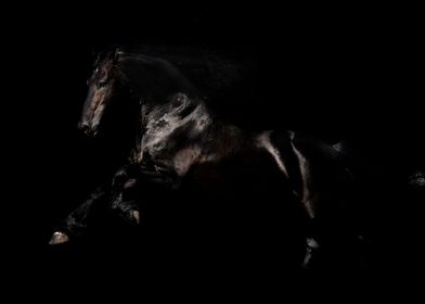 Friesian Horse Photo