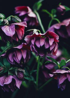 purple flowers b
