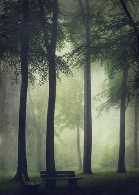 Misty Summer Forest