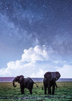 Elephant And Milky Way