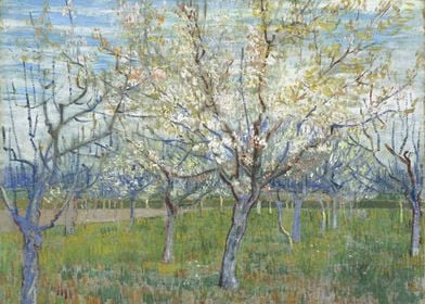 Orchard with Blossoming Ap