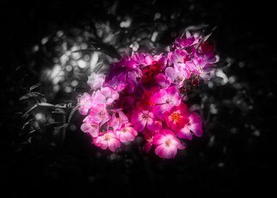 Flowers Colorkey