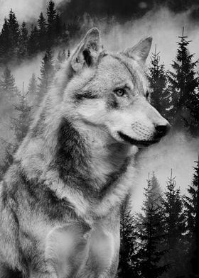Wolf Forest Black&White