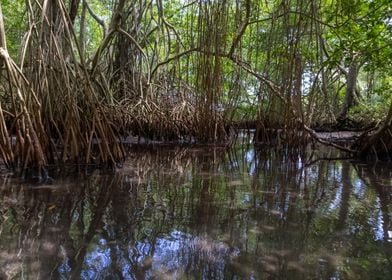 Laguna Dudu Mangroves