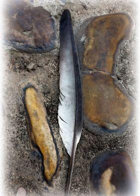 A fallen feather