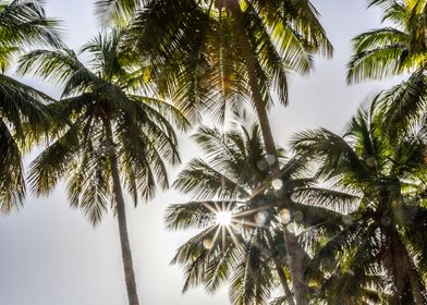 Sunstar between Palms