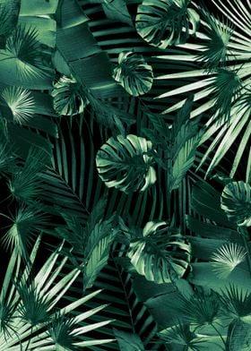 Jungle Night Siesta 1