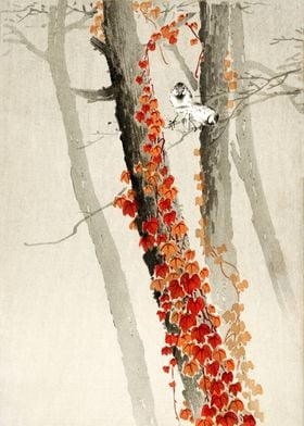 Birds and red Ivy woodcut