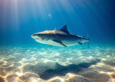 Shark fish underwater
