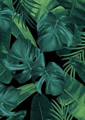 Summer Night Jungle 1