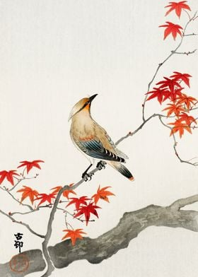 Bird on maple tree woodcut