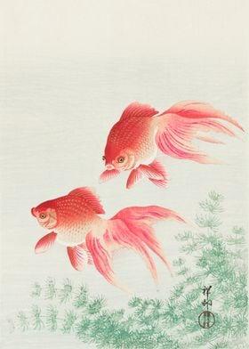 Goldfish Japanese woodcut