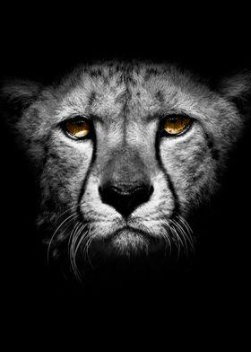 wild jaguar head poster