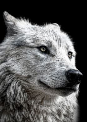 wild wolf face poster