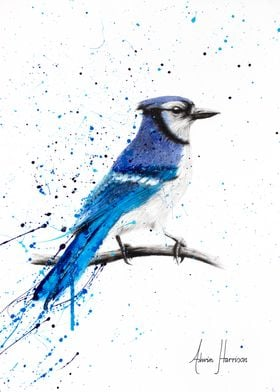 Blue Jay Sunday