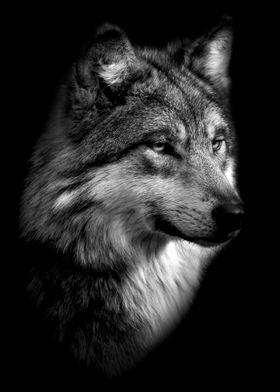 black wild wolf poster