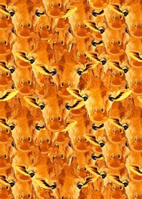 A lot of Giraffe